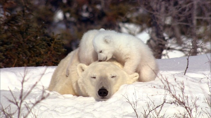 knut-and-friends