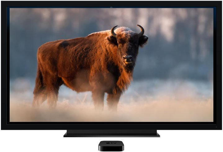appletv-bison